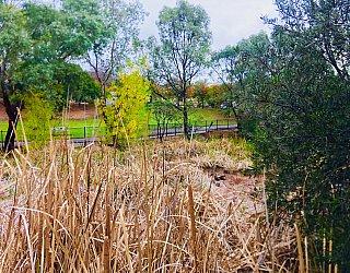 Hugh Johnson Boulevard Reserve Reeds And Ducks