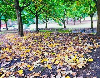 Hugh Johnson Boulevard Reserve Autumn Leaves