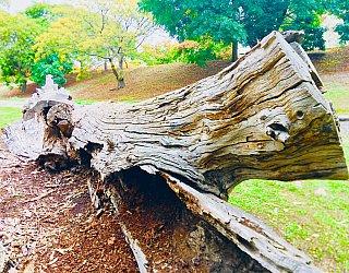 Hugh Johnson Boulevard Reserve Climbing Log