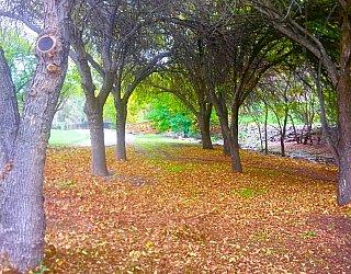 Hugh Johnson Boulevard Reserve Trees
