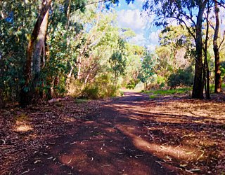 Warriparingga Wetlands Path 2