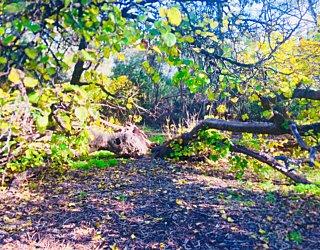Warriparingga Wetlands Split Tree