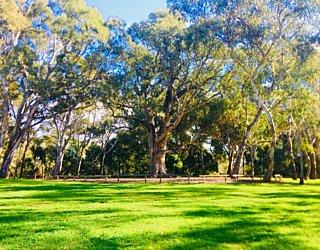 Warriparingga Wetlands Scar Tree