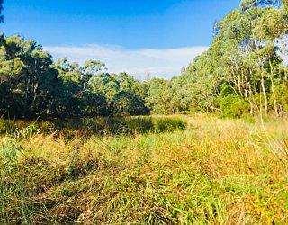 Warriparingga Wetlands Wetlands 2