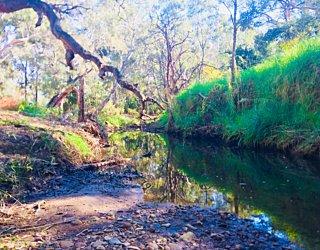 Warriparingga Wetlands River 3