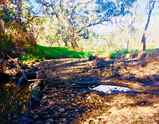 Warriparingga Wetlands River 2