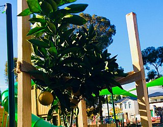 Hendrie Street Reserve Inclusive Playground Citrus 1