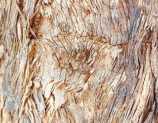 Everest Avenue Reserve Van Gogh Tree 1