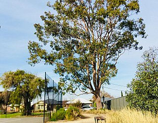 Aldridge Avenue Reserve Track 1