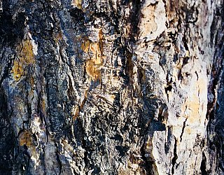 Mitchell Street Reserve Bark 1