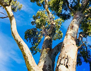 Mitchell Street Reserve Tree Sky 2