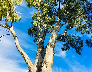 Mitchell Street Reserve Tree Sky 1