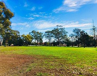 Mitchell Street Reserve Grass 4
