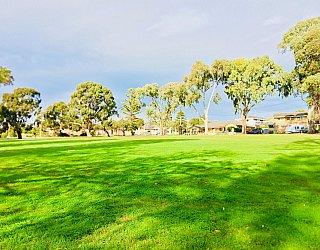 Mitchell Street Reserve Grass 2