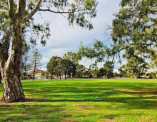 Mitchell Street Reserve Grass 1