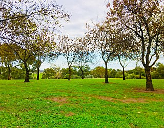 Hessing Crescent Reserve Trees 4