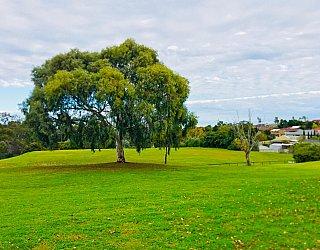 Hessing Crescent Reserve Tree 1