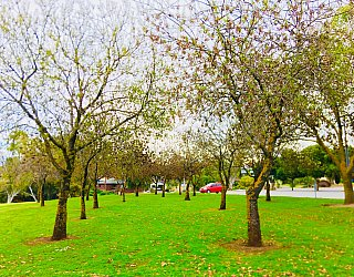 Hessing Crescent Reserve Trees 2