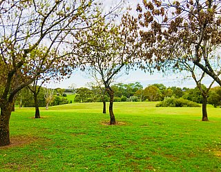 Hessing Crescent Reserve Trees 1
