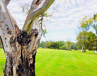 Hessing Crescent Reserve Frontage Tree 2