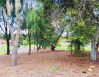 Tyson Avenue Reserve Trees 2