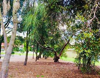 Tyson Avenue Reserve Trees 1