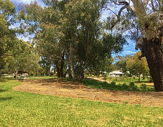 Kenton Avenue Reserve Grass
