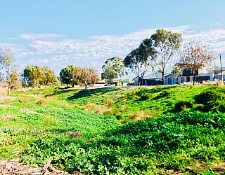 Rosedale Avenue Reserve Swale 2