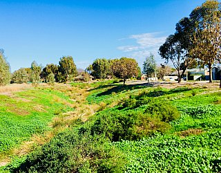 Rosedale Avenue Reserve Swale 1