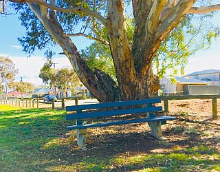 Rosedale Avenue Reserve Bench 1