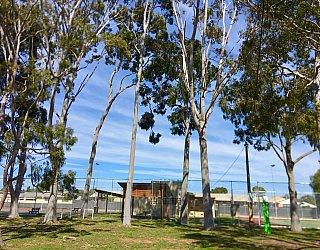 Woodforde Family Reserve Tree 4
