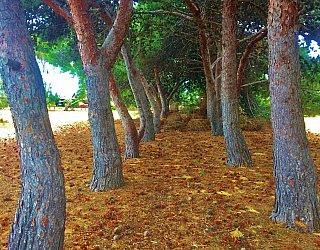 Nannigai Drive Reserve Slalom Trees