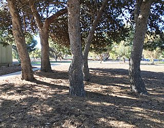 Nannigai Drive Reserve Trees 3