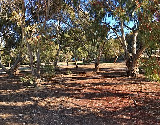 Nannigai Drive Reserve Trees 4