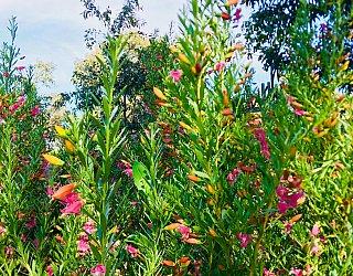 Oaklands Reserve Oaklands Recreation Plaza Nature 1
