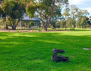 Oaklands Reserve Oaklands Recreation Plaza Rotunda Space Ducks 1