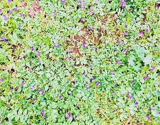 Bombay Avenue Reserve Flowers 1