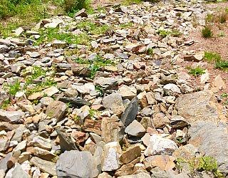 Mostyn Road Reserve Swale 5
