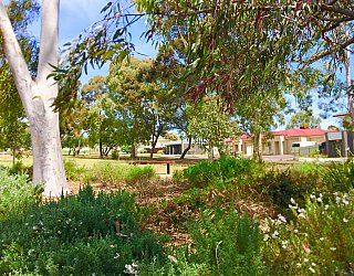 Waratah Square Reserve Native Planting 6