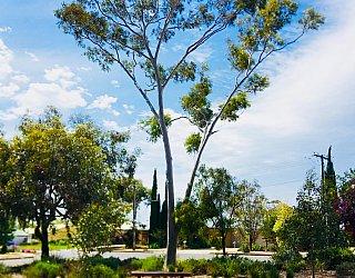 Waratah Square Reserve Facilitieis Seat 2