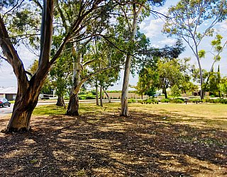 Waratah Square Reserve 1