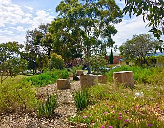 Waratah Square Reserve Native Planting 3