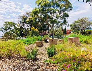Waratah Square Reserve Native Planting 2
