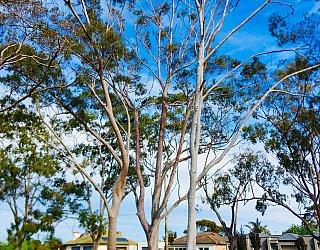 Cowra Crescent Reserve North 2