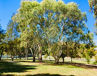 Klippel Avenue Reserve 3