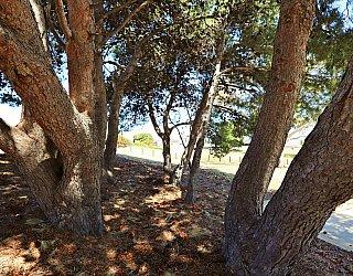 Mema Court Reserve Trees 1