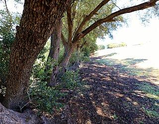 Coorabie Crescent Reserve 7