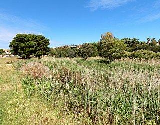 Cormorant Drive Reserve North 1