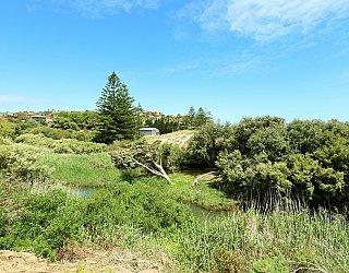Cormorant Drive Reserve North 2