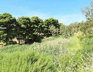 Cormorant Drive Reserve North 3